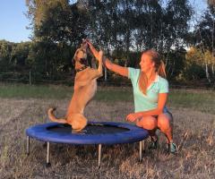 Hund auf Trampolin bei propriozeptivem Training